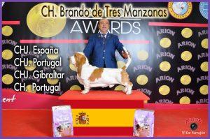 CH. Brando de Tres Manzanas Basset Hound